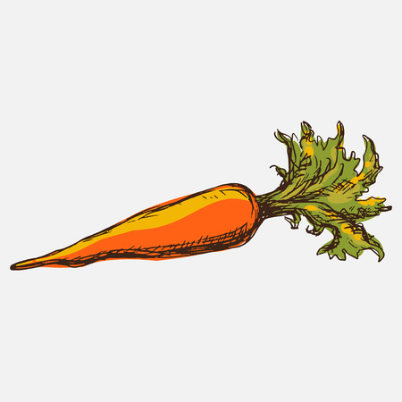 halm: Carrot isolated Simple sketch icon  Illustration