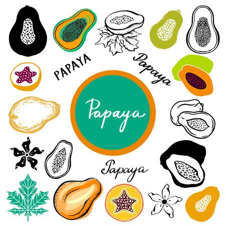 Papaya fruit leafs Illustration
