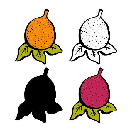 Passion fruit with leafs closeup color, line art, black silhouette