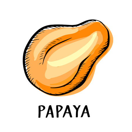 Papaya fruit closeup color hand drawn icon isolated on a white background, art logo design