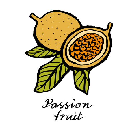 Passion fruit with leafs closeup hand drawn icon isolated on white background, art logo design