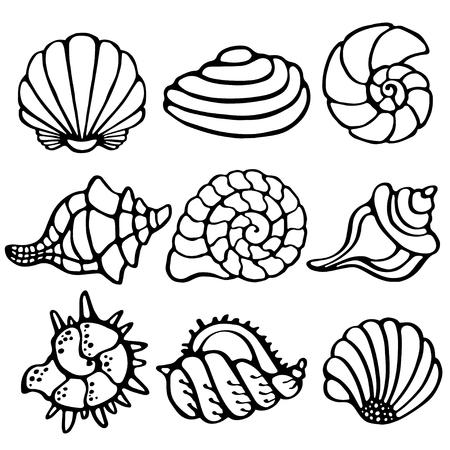 Sea shells icon set isolated on white background, art logo design