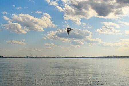 One white sea gull flies in the blue sunny sky over the sea. Seagull flies over a city beach.