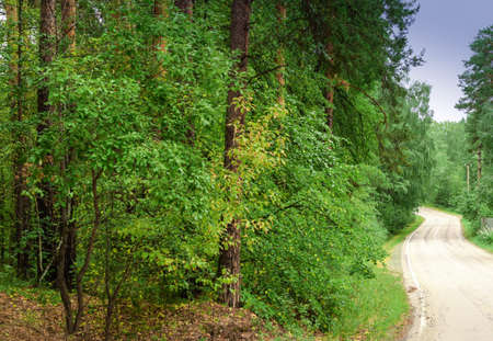 Empty twisting road. Dangerous turn of the road in the forest.Beautiful forest landscape.