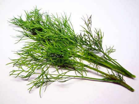 two sprigs of dill on a white background photo