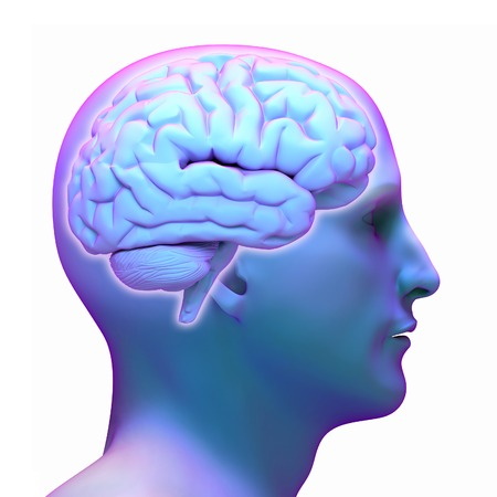 lateral view: Brain diagram in human head on white background.