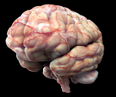 Human brain isolated on black background.