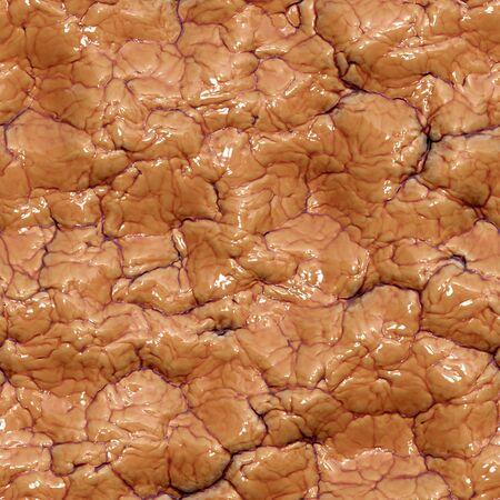 gyrus: Seamless organic surface.