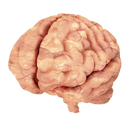 mentality: Human brain isolated on white background.