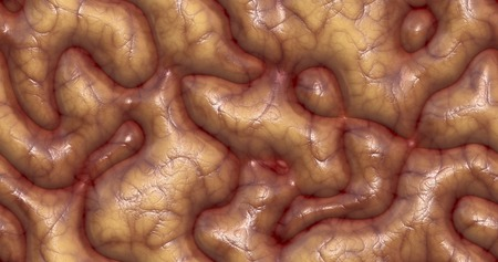 high resolution: Seamless texture of brain tissue. Illustration organic surface. High resolution.
