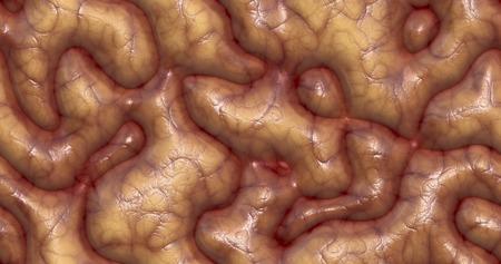 cerebral artery: Seamless texture of brain tissue. Illustration organic surface. High resolution.