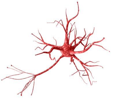 Neurone 3D isolé sur fond blanc closeup. Une haute résolution. Banque d'images - 90341138