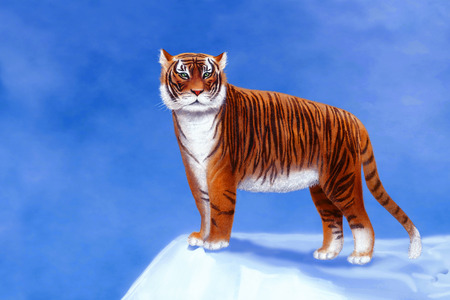A beautiful tiger stands on a hill. Banque d'images
