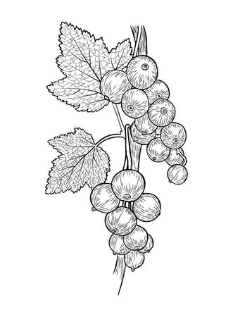 Vektorrealistische, handgezeichnete (in schwarz) weiße Skizze. Vorlage zum Ausmalen. Vektor-EPS 10.