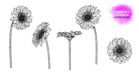 Set of 5 flowers of gerbera (chamomile, chrysanthemum), hand-drawn. Ink-drawn flower. Ilustração