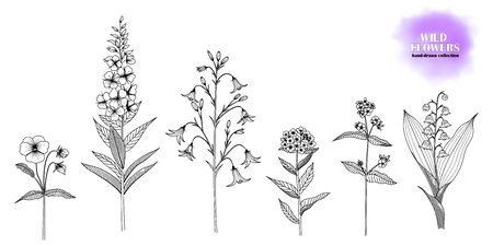 Set of hand-drawn flowers; Forget-me-not, lungwort, lily of the valley, willow herb, bellflower, violet. Black and white.