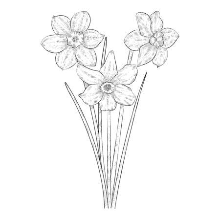 Black and white narcissus flowers. Ilustracja