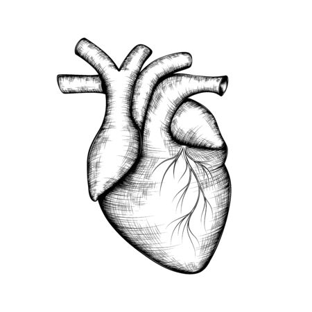 Hand-drawn black and white sketch of a human heart. Ilustrace