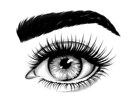 Imagen realista dibujada a mano del ojo de una mujer con cejas y pestañas largas. Ilustración de moda.