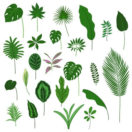 Vector set of hand-drawn tropical leaves.