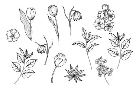 Spring hand-drawn flowers of apple, cherry, sakura, tulips, snowdrops, tree branches and leaves. Black and white doodles Vector eps 10