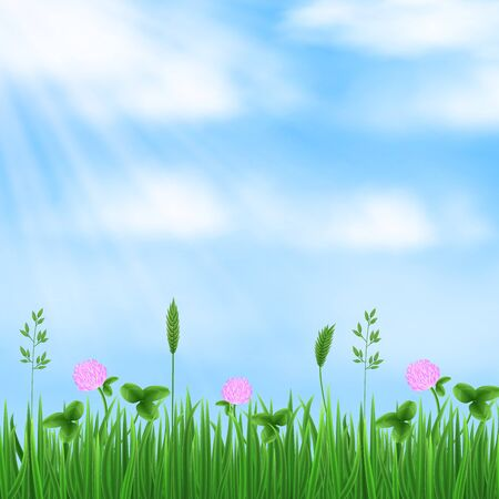 Spring, summer background. Blue sky, sun rays, fresh green grass, flowers and clover leaves. Vector concept.