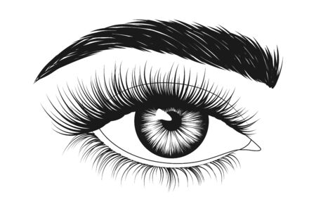 Hand-drawn woman's eye with eyebrow and long eyelashes. Fashion illustration.