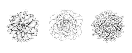 Vector flowers of rose, chrysanthemum, dahlia. Hand-drawn black and white flower heads. Ilustracja
