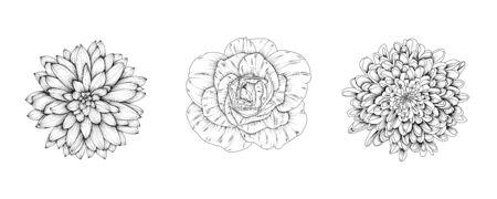 Vector flowers of rose, chrysanthemum, dahlia. Hand-drawn black and white flower heads. Stock Illustratie
