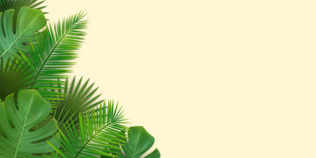 Rectangular summer background with green tropical leaves of palms and monstera. Vector EPS 10. Stock Illustratie