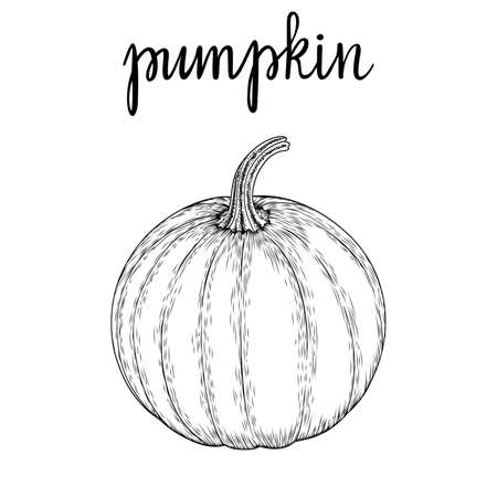 Vector image of a hand-drawn pumpkin black white, coloring. Ink or pen sketch.