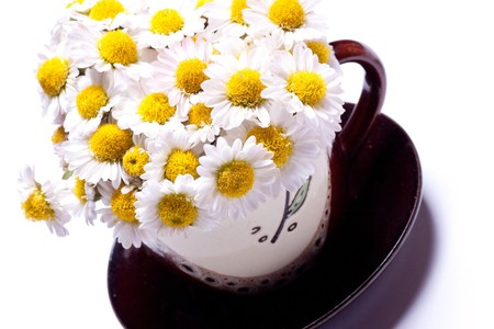 Flowers of camomile in a cup on a saucer. photo