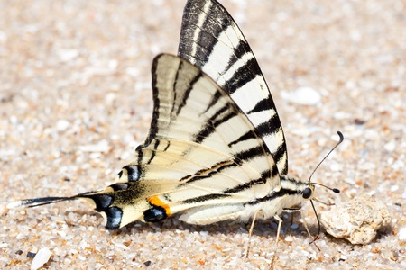 The butterfly on sand ashore Stock Photo - 10192383