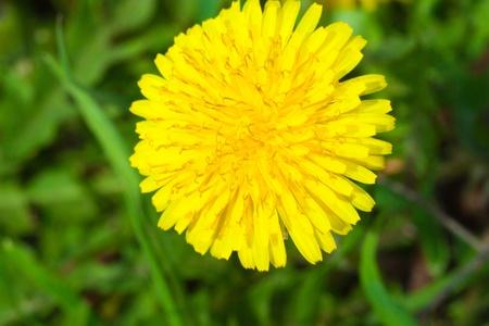 clean wonderful background is a green grass Stok Fotoğraf