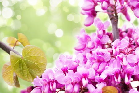 Tree blossoming gentle pink colors photo