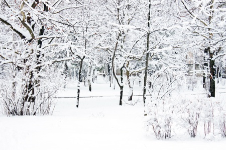 Winter park (trees covered with snow) Stock Photo - 11534313