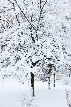 Winter Tree In The Snow photo