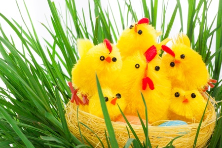 nest with easter chickens in a green grass photo