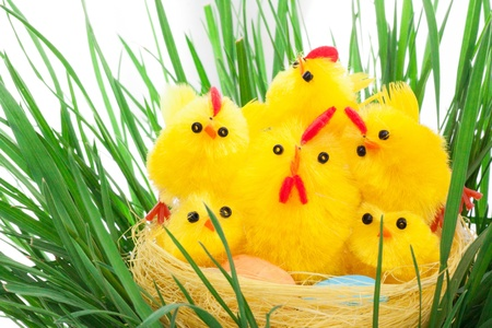 nest with easter chickens in a green grass Stock Photo - 12857925