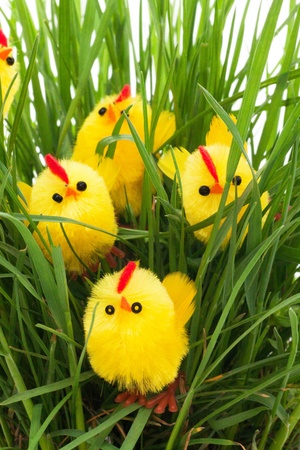 group of easter chickens in a green grass