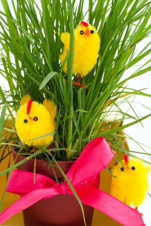 three easter chickens near a gift of a bush of a grass