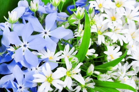 background spring wild flowers Stock Photo - 13594018