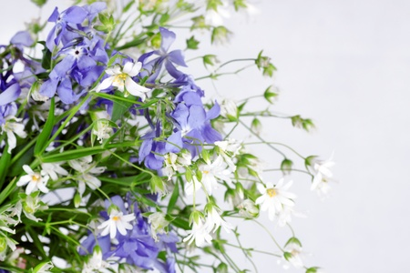 bouquet of spring wild flowers photo
