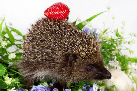 small hedgehog, wild flowers and ripe strawberry Stock Photo - 13671907