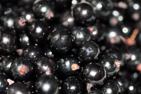background of berry of a black currant photo