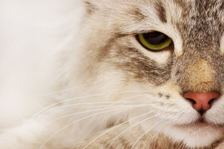 Close up of a cat with wide yellow eyes  Shallow DOF on eye  photo
