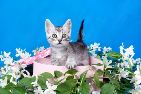 small kitten in a box in flowers photo
