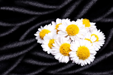 Daisy flowers on black silk photo
