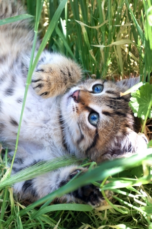 little kitten playing on the grass close up photo
