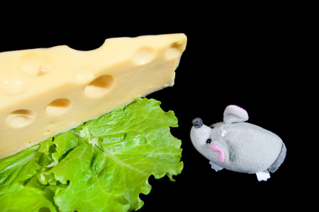 monterrey: piece of cheese, lettuce and mouse
